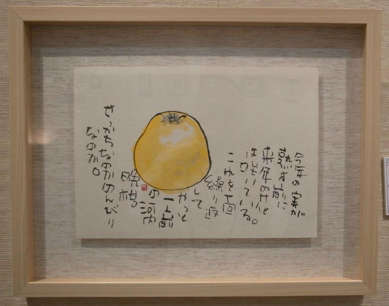 河内晩柑(2013/5)